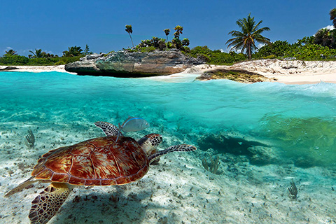 Tours from Playa del Carmen to Akumal